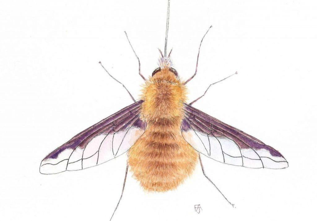 Beefly-F-A-Jackson