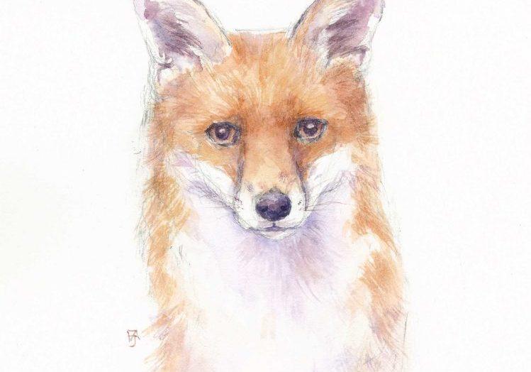 Fox-portrait-F-A-Jackson