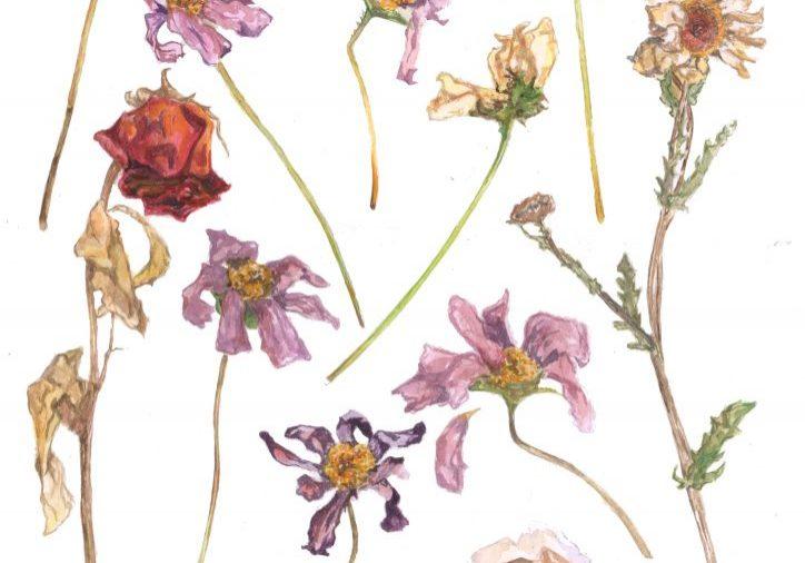 flowers-transparent